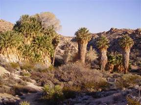 joshua tree national park office escape traveling the usa