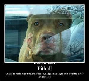Pitbull Desmotivaciones