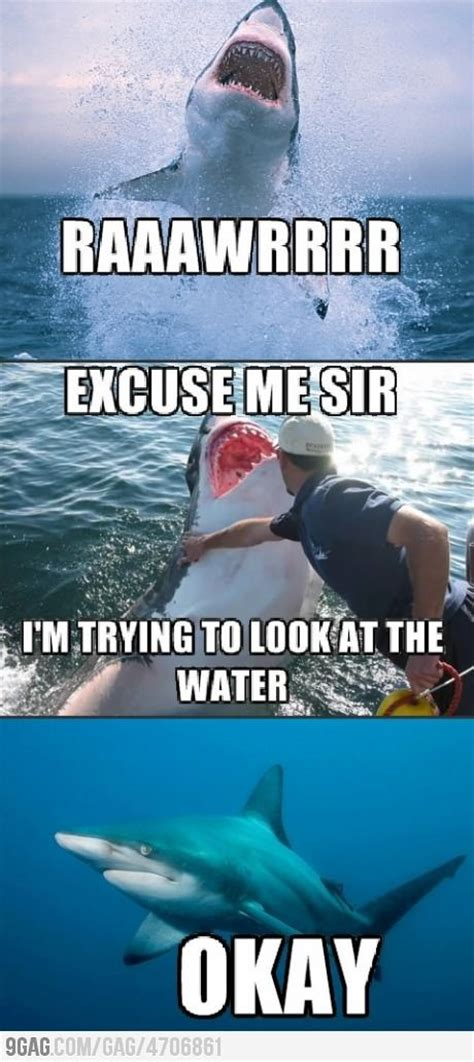 Shark Memes - funny shark pictures with captions www pixshark com images galleries with a bite