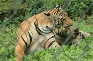Sanjay Gandhi National Park - Trekpedia