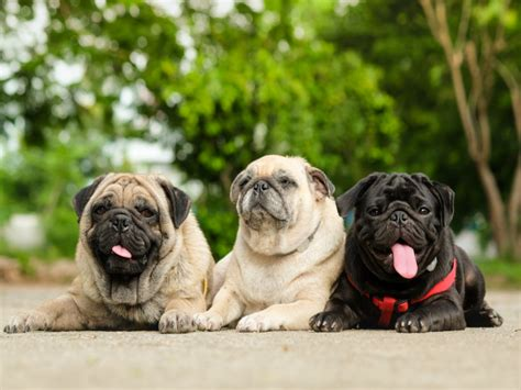 8 Popular Dog Breeds In India Apartment In Baltimore Md With Utilities Included 1 Bedroom Pittsburgh Pa Marina Del Rey Apartments Studio Lake Charles On 5th Avenue Best Foster City Ca Furnished Downtown Orlando Rosemont Delk Rd Buckhead Atlanta Under 1000