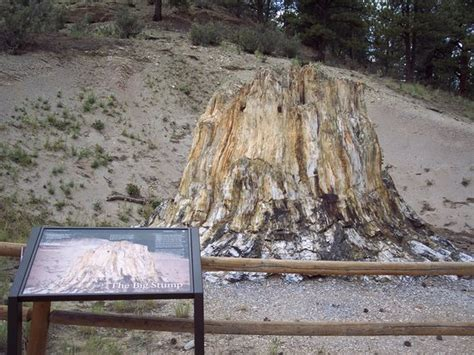 Florissant Fossil Beds by Florissant Fossil Beds National Monument Co Top Tips