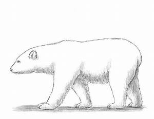 17 Best images about drawing on Pinterest | Polar bear ...