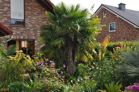 Garten Kaufen Deutschland by Garten Palmen Kaufen Winterharte Palmen Kaufen