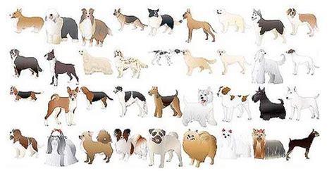 animals vectors illustrator tutorials tips