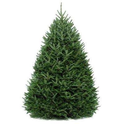 price of real christmas trees at home depot real trees trees the home depot