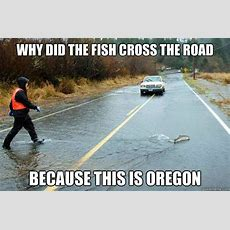 Why Did The Fish Cross The Road Because This Is Oregon  Meanwhile In Oregon Quickmeme