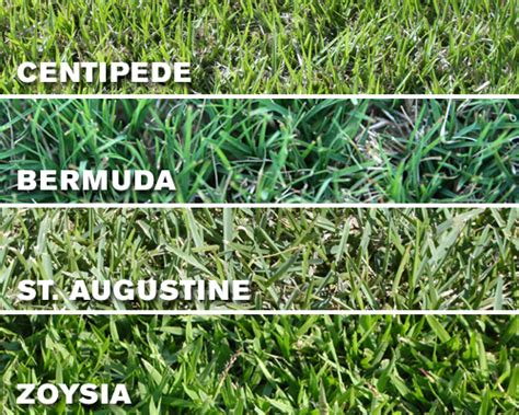 what are the different types of grass grass selections brazos valley hydroseeding