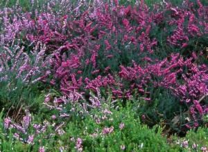 Fleur D Hiver Pour Jardinière : les plantes qui fleurissent en hiver ~ Dailycaller-alerts.com Idées de Décoration