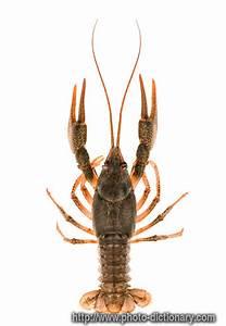 Crawfish, served Louisiana style! | yum yum | Pinterest ...