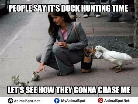 Duck Hunting Meme - duck memes