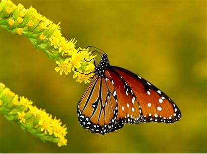 Butterfly Wallpapers Bird Tablet Simple Save Computer