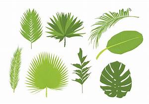 Palm Leaves Vectors - Download Free Vector Art, Stock ...