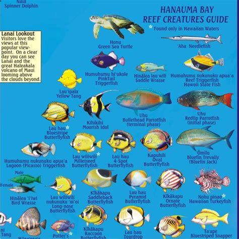 fish species  hanauma bay hanauma bay guide frankos