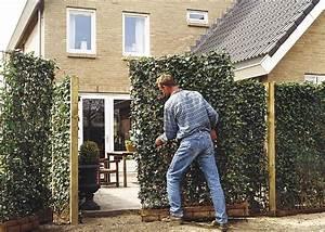 Garten Sichtschutz Pflanzen : die hecke am laufenden meter zaun pflanzen oder hecke bauen moderner sichtschutz im garten ~ Watch28wear.com Haus und Dekorationen