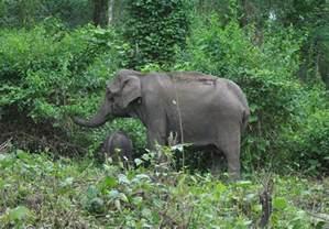 Forest with Wild Animals