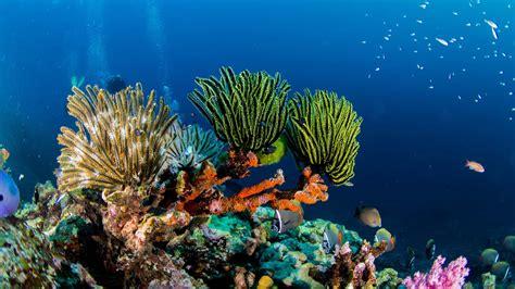 Cozumel Dive Cozumel Scuba Diving Diversity Diving Scuba Diving In