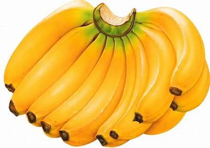 Banana Bananas Benefits Facts Health Fruits Nutritional