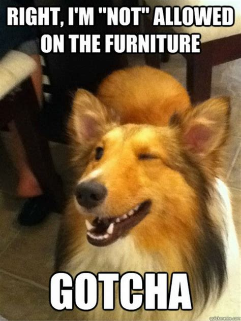 Funny Dog Pictures Memes - more funny dog memes 01