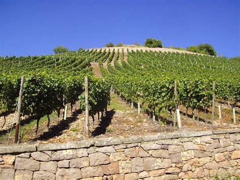 Sitemap  Sächsischer Wein, Meißner Wein, Weinhandel Aus