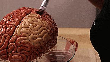 cuisiner la cervelle un gâteau façon cervelle incroyablement réaliste pour bien