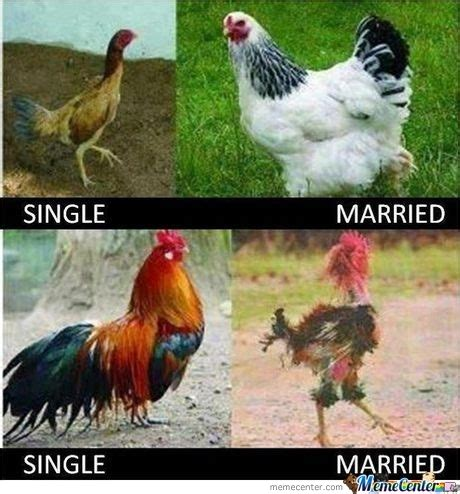 Hen Meme - hen and rooster after marriage by sherlock13 meme center