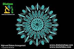 Diatom Shop