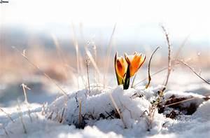 Blumen Im Winter : winter ~ Eleganceandgraceweddings.com Haus und Dekorationen