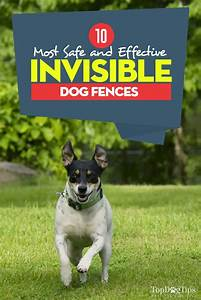 top 10 best invisible dog fence for dogs safe containment With best invisible dog fence