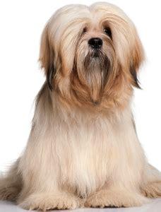 dog food  lhasa apsos  top picks pawdiet