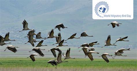 world migratory bird day 2016 10 may cms