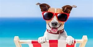Urlaub Mit Hund Checkliste Worauf Ist Zu Achten Dbb