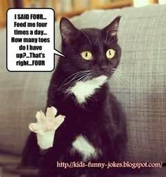 cat jokes for jokes for pics of cats