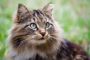 pet cats optimal nutrition for your pet cat guiding instincts