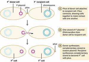 How Asexual Prokaryotes Achieve Genetic Diversity