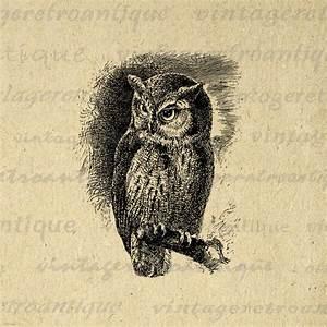 Printable Graphic Screech Owl Image Bird Digital ...