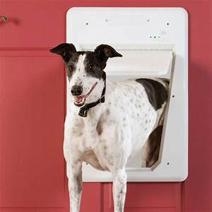 automatic locking pet sensing door the green head With dog door that locks automatically