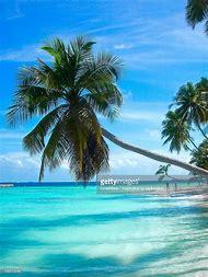 Tropical Beach Paradise Island