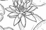 Lily Easter Coloring Drawing Water Pages Lilies Printable Flowers Waterlily Getdrawings sketch template