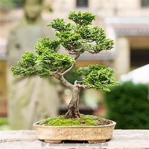Chinesischer Wacholder Bonsai : bonsaiausstellung 2015 im lapidarium stuttgart fotos video ~ Sanjose-hotels-ca.com Haus und Dekorationen