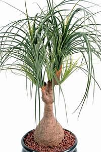 Grande Plante Artificielle : vert espace plantes et arbres artificiels ~ Teatrodelosmanantiales.com Idées de Décoration