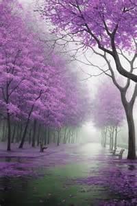 Beautiful Purple Tree