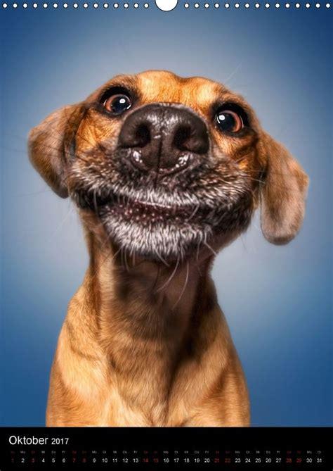 calvendo kalender funny faces lustige hundebilder