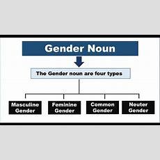 What Is Gender Noun? Gender Noun Definition? Youtube