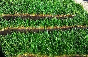 Rouleau Gazon Naturel : gazon en rouleau un gazon d 39 un an en un jour acheter ~ Melissatoandfro.com Idées de Décoration