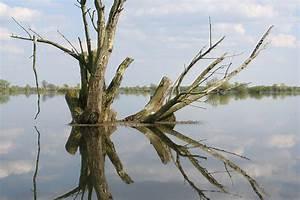 Baum Am Wasser : datei baum im wasser jpg wikipedia ~ A.2002-acura-tl-radio.info Haus und Dekorationen