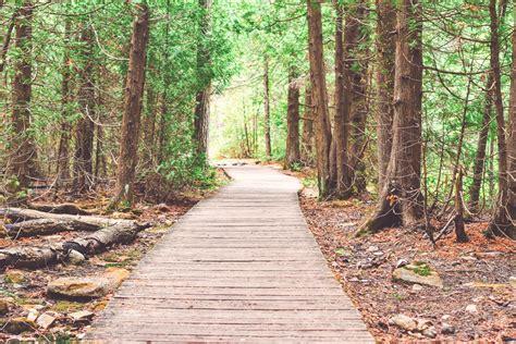 brown wooden bridge  forest  golden hour