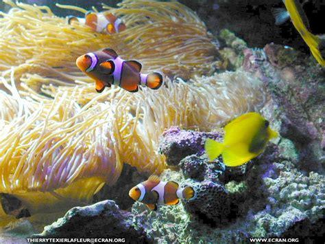 fond d 233 cran de loire atlantique le croisic aquarium du croisic poisson en fond 233 cran par