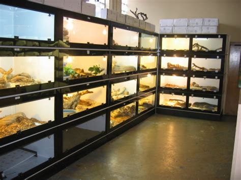 reptile rack system stacked snake cages custom reptile cage rack system