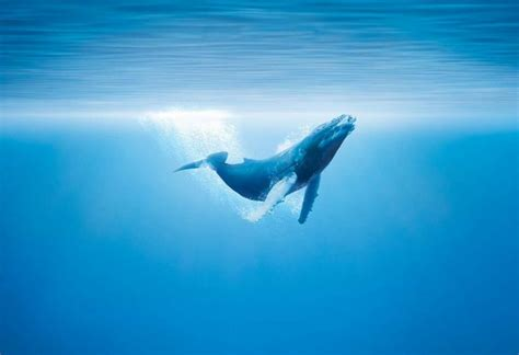 Best Hd Whale Photo by Hdq Mystical Whale Pictures 42 High Quality